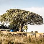 002-Ngorongoro