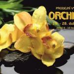 orchideje2019fcbbezkrokousem